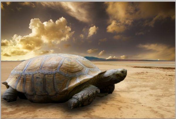 正如你可以看到在龟照明密切相匹配的背景和有说服力的影子到位.