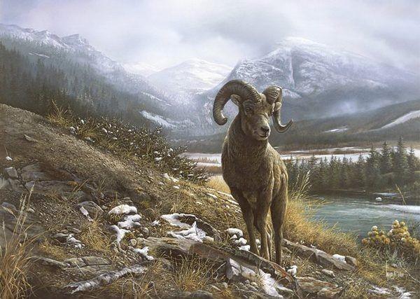 野生动物,绘画作品,温哥华,艺术家,风格独特,插画大师,创意设计
