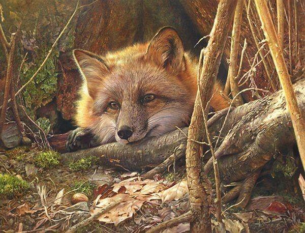 野生动物绘画作品_干将莫邪设计公司