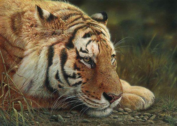 野生动物,绘画作品,温哥华