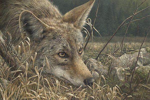 动物,绘画作品,温哥华