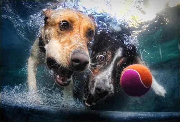 呆萌可爱水下动物